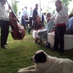 Wedding Celebration - Hungarian Trio in the background